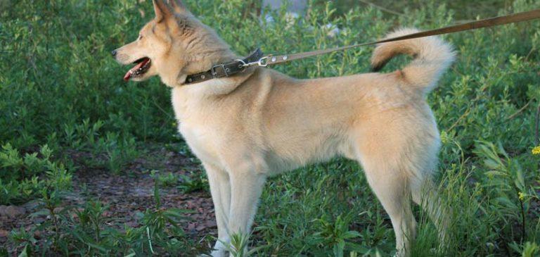 Il nostro cane perde l'equilibrio? Attenzione alla sindrome vestibolare