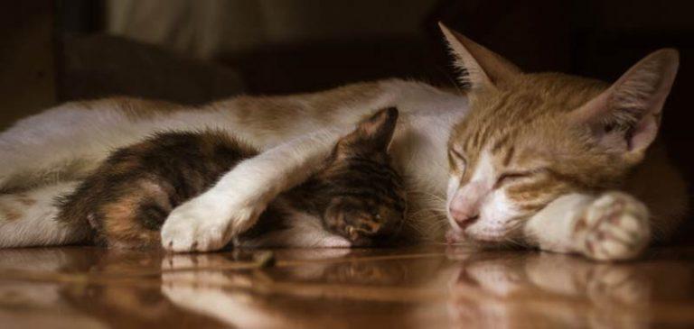 Perché i gatti dormono così tante ore?